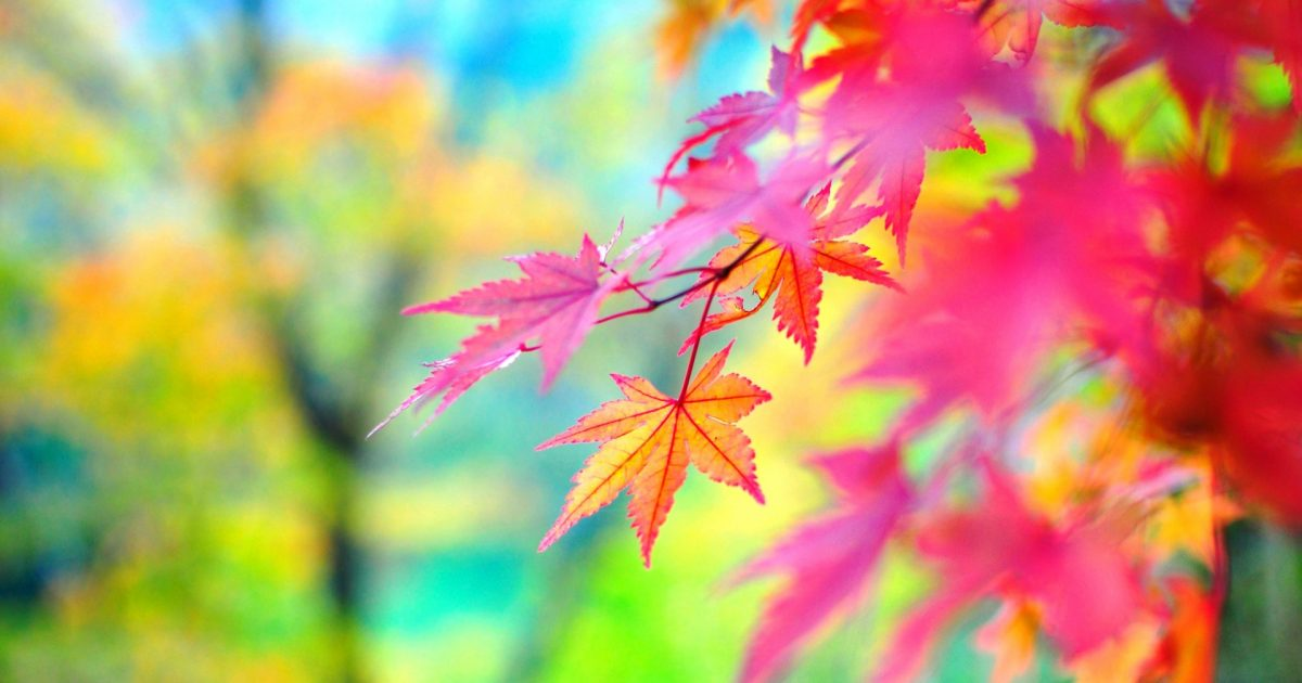6934397-red-autumn-leaves